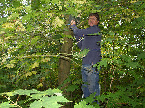 Just beyond the glade – TMAEG's first bird box being installed by Peter Blyth