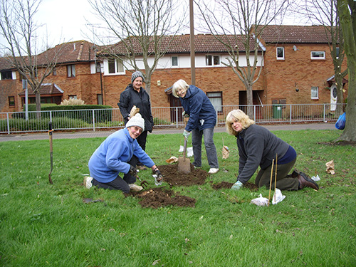 Margaret, Sally, Sue and Lin planting Narcissus bulbs within the central green facing Ashbrook School