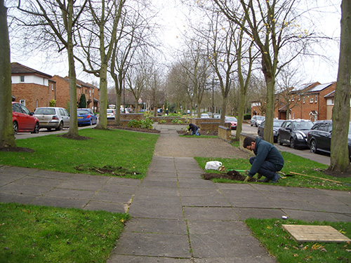 Ken (foreground) and Chris C planting tulip bulbs at six corner locations in the central garden